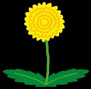 Flower_tanpopo_2